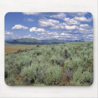 USA, Idaho, Camas Co. Sagebrush and lupine Mouse Pad