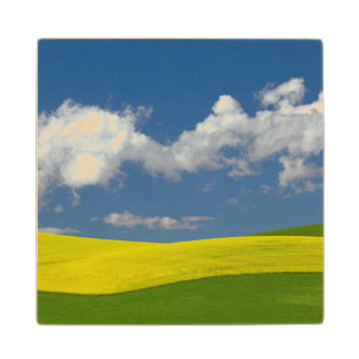 USA, Idaho, Idaho County, Canola And Wheat Wood Coaster