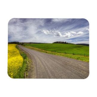 USA, Idaho, Idaho County, Canola Field Rectangular Photo Magnet