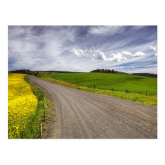 USA, Idaho, Idaho County, Canola Field Postcard