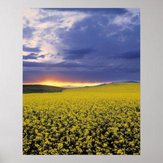 USA, Idaho, Swan Valley. A fiery sunset erupts Poster