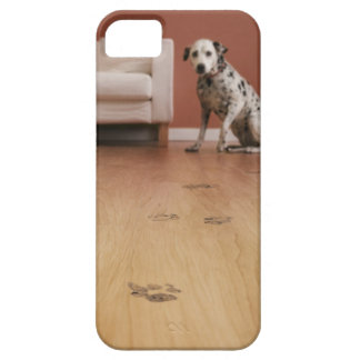 USA, Illinois, Metamora, Close-up of floor with iPhone 5 Covers