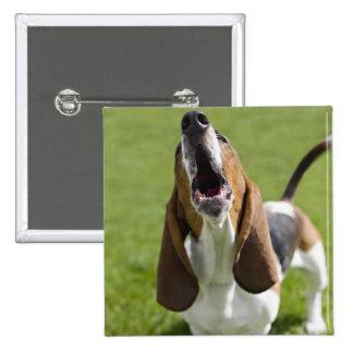USA, Illinois, Washington, Portrait of Bassett 15 Cm Square Badge