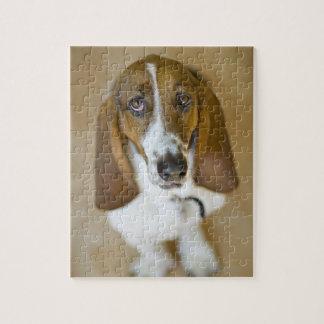 USA, Illinois, Washington, Portrait of Bassett 2 Jigsaw Puzzle