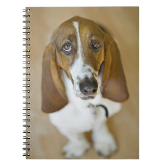 USA, Illinois, Washington, Portrait of Bassett 2 Notebook