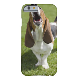 USA, Illinois, Washington, Portrait of Bassett Barely There iPhone 6 Case