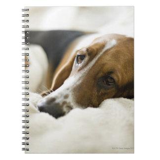 USA, Illinois, Washington, Portrait of Bassett Spiral Note Book