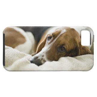USA, Illinois, Washington, Portrait of Bassett Tough iPhone 5 Case