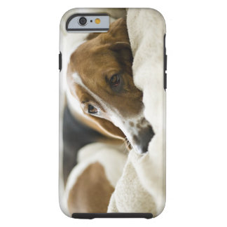 USA, Illinois, Washington, Portrait of Bassett Tough iPhone 6 Case