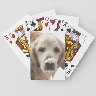 USA, Indiana, Carmel. Golden retriever with Playing Cards