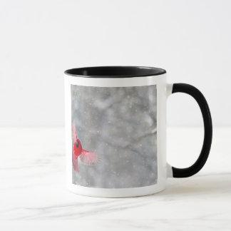 USA, Indiana, Indianapolis. A male cardinal Mug