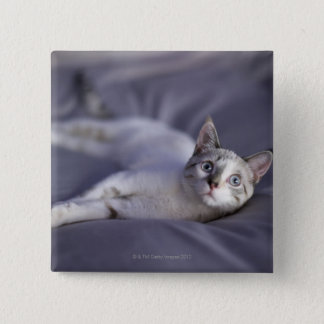 USA, Iowa, Portrait of young kitten 2 15 Cm Square Badge