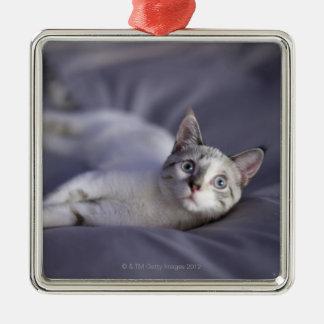 USA, Iowa, Portrait of young kitten 2 Christmas Ornament