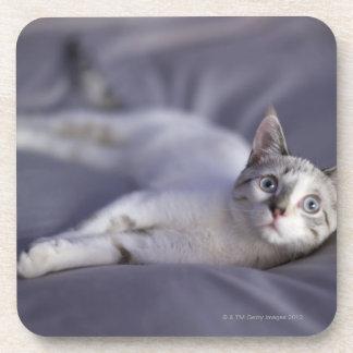 USA, Iowa, Portrait of young kitten 2 Coaster