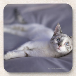 USA, Iowa, Portrait of young kitten 2 Drink Coaster