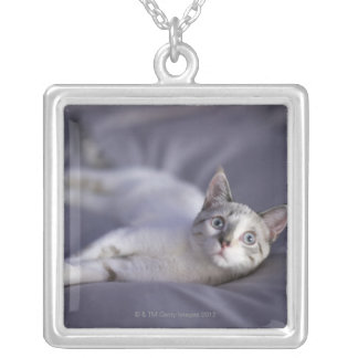USA, Iowa, Portrait of young kitten 2 Silver Plated Necklace
