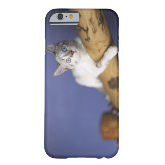 USA, Iowa, Portrait of young kitten Barely There iPhone 6 Case