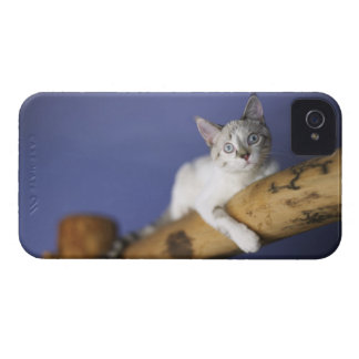 USA, Iowa, Portrait of young kitten iPhone 4 Cases