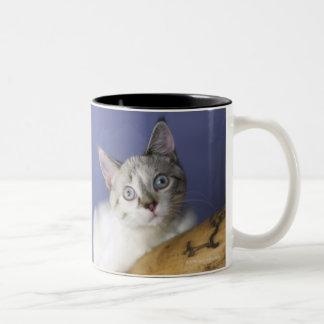 USA, Iowa, Portrait of young kitten Two-Tone Coffee Mug