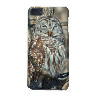USA, Kansas. Barred Owl (Strix Varia) iPod Touch (5th Generation) Cases