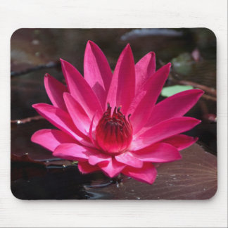 USA, Kansas, Bright Red Water Lilly Mouse Pad