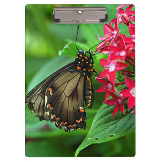 USA, Kansas, Butterfly On Red Flowers Clipboard