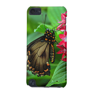USA, Kansas, Butterfly On Red Flowers iPod Touch (5th Generation) Cover