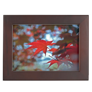 USA, Kansas. Fall Colors Keepsake Box