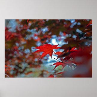 USA, Kansas. Fall Colors Poster