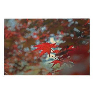 USA, Kansas. Fall Colors Wood Print
