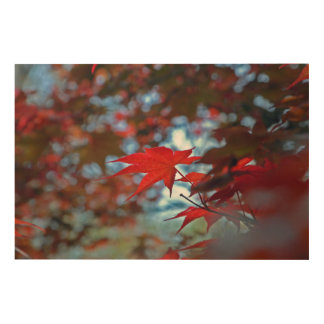 USA, Kansas. Fall Colors Wood Wall Decor