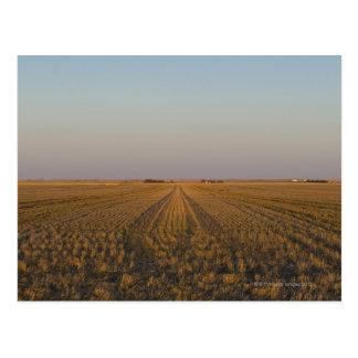 USA, Kansas, field Postcard