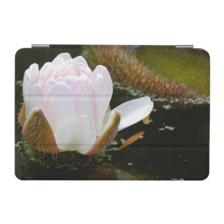USA, Kansas, Light Pink Water Lilly Blooming iPad Mini Cover