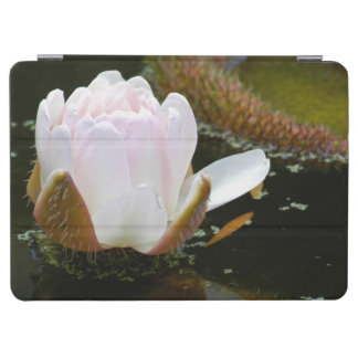 USA, Kansas, Light Pink Water Lilly Blooming iPad Air Cover