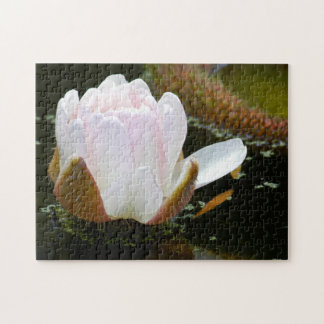 USA, Kansas, Light Pink Water Lilly Blooming Jigsaw Puzzle
