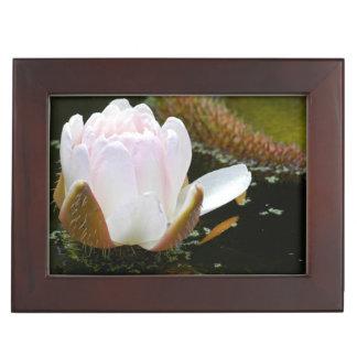 USA, Kansas, Light Pink Water Lilly Blooming Keepsake Box