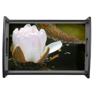 USA, Kansas, Light Pink Water Lilly Blooming Serving Tray