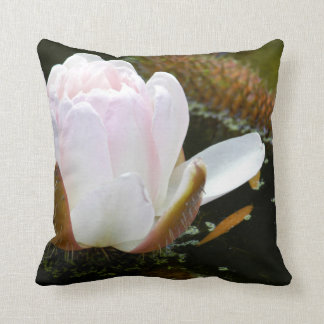 USA, Kansas, Light Pink Water Lilly Blooming Throw Cushions