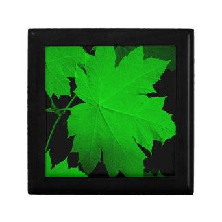 USA, Kansas, Oak Leaves In The Light Gift Box