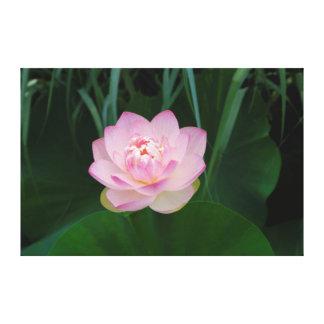 USA, Kansas, Pink Water Lilly Canvas Prints