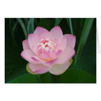 USA, Kansas, Pink Water Lilly Card