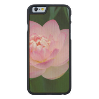 USA, Kansas, Pink Water Lilly Carved® Maple iPhone 6 Case