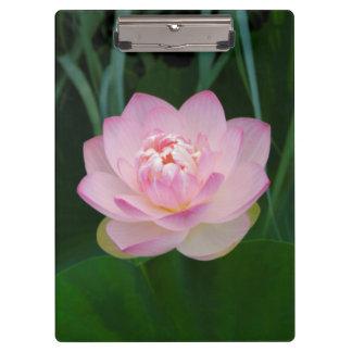 USA, Kansas, Pink Water Lilly Clipboard