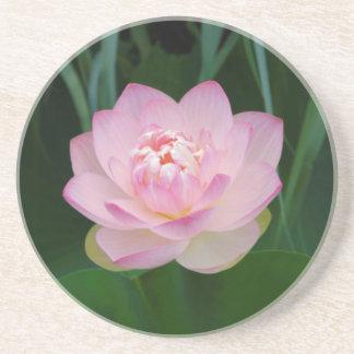USA, Kansas, Pink Water Lilly Coaster