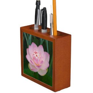 USA, Kansas, Pink Water Lilly Desk Organiser