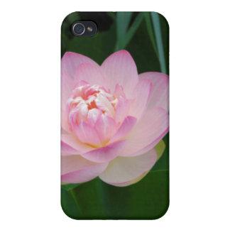 USA, Kansas, Pink Water Lilly iPhone 4 Case