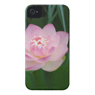 USA, Kansas, Pink Water Lilly iPhone 4 Covers