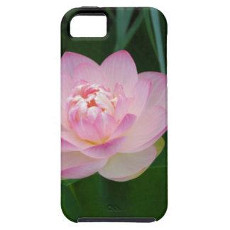 USA, Kansas, Pink Water Lilly iPhone 5 Case