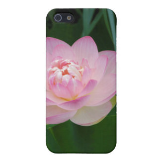 USA, Kansas, Pink Water Lilly Covers For iPhone 5