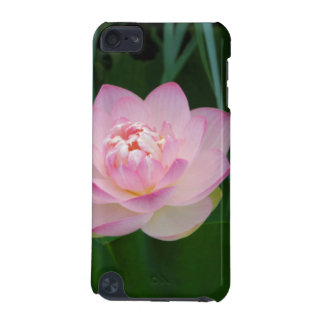 USA, Kansas, Pink Water Lilly iPod Touch (5th Generation) Case